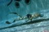 breier-piscine2.png -